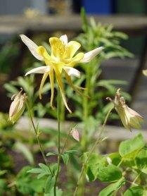 garden6(may17)