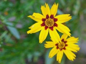 flower3(oct17)
