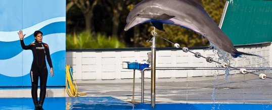 Delfinshow i Barcelona