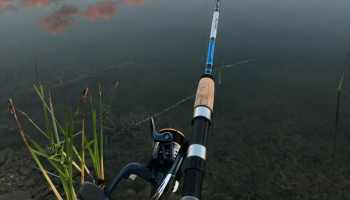 Choosing the Best Gear Ratio Fishing Reel For You