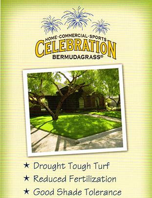 Celebration™ Brochure