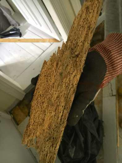 Jumit syöneet sieneksi yhden lattialankuista.