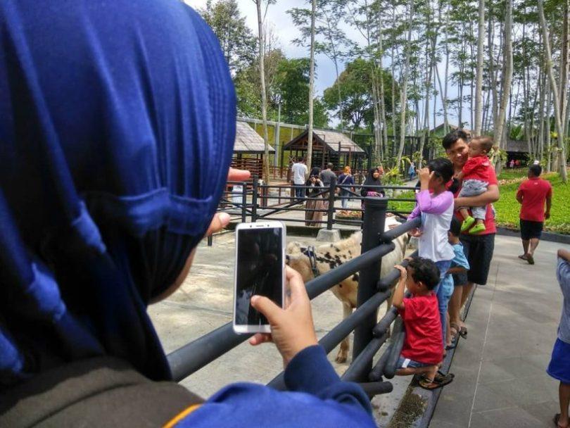 mini zoo the village jawa tengah
