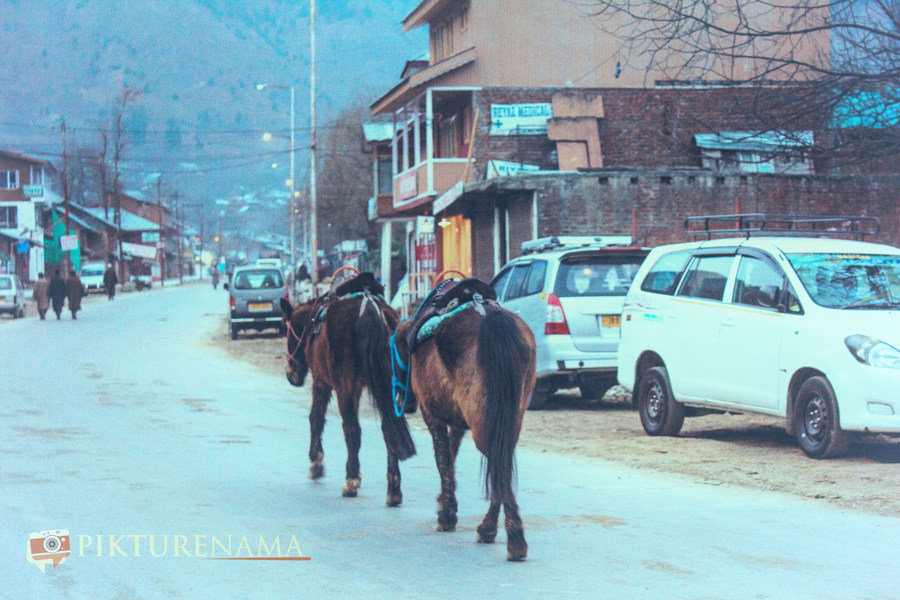 Horses after a days hard work at Pahalgam town