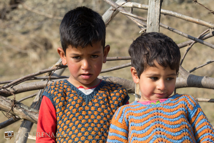 Faces of Kashmir apple orchard 7