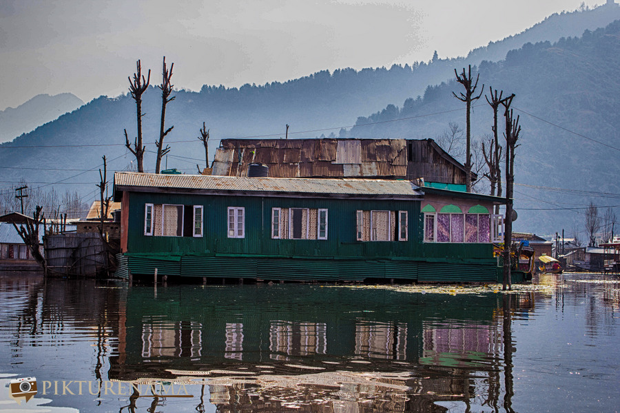 Shikara Ride in Dal Lake 4