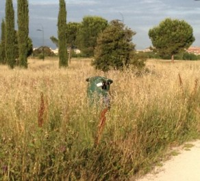 L'incuria: erba alta e cassonetto abbandonato