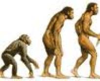 ¿Por qué ArdiPithecus?