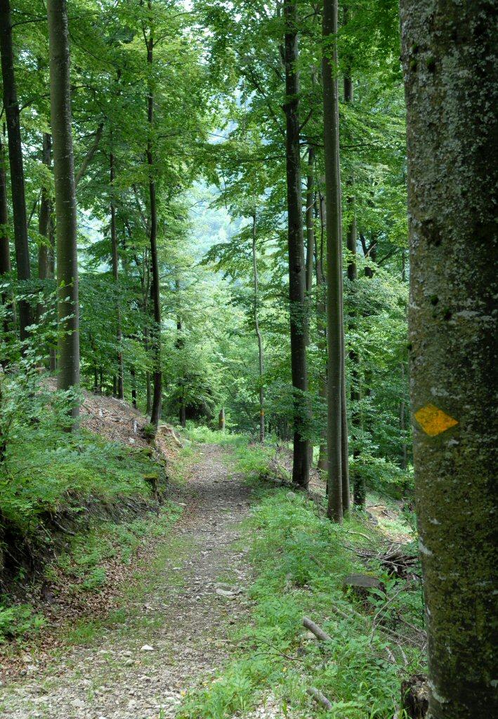 LeChateau, Path down through woods