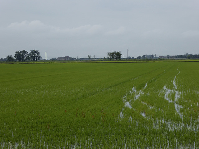 Beyond Vercelli the rice fields (and mosquitos) start!