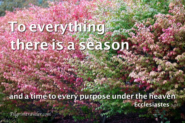 """Ecclesiastes 3:1 """"To everything there is a season, and a time to every purpose under the heaven."""""""