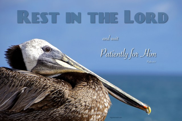 "Psalm 37:7 ""Rest in the Lord and wait patiently for Him."""