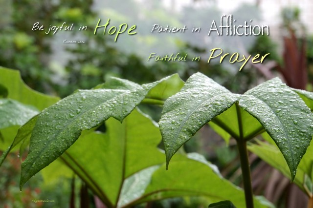 "Romans 12:12 ""Be joyful in hope, patient in affliction, faithful in prayer."""