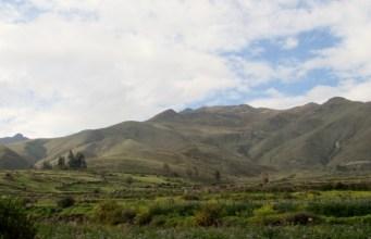 Arequipa,Colca,Peru (73) (800x533)
