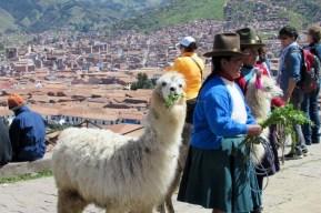 Cusco, Peru (99) (800x533)