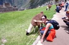 Machu Picchu, Peru (211) (800x533)