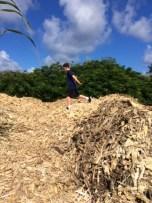 Ryan on the cane mulch pile