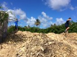 R&R on the cane mulch pile