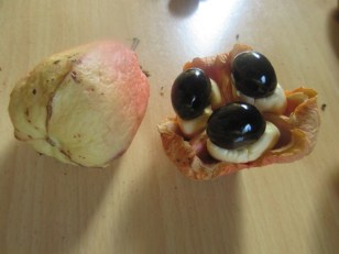 Local Fruit With Poisonous Seeds