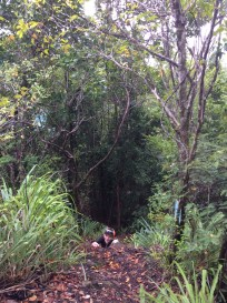 (Ryan) Steep Hike Behind Rain Forest Café, Marigot Bay, St. Lucia