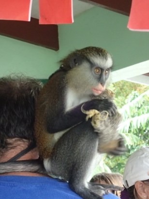 This guy hikes with his monkey