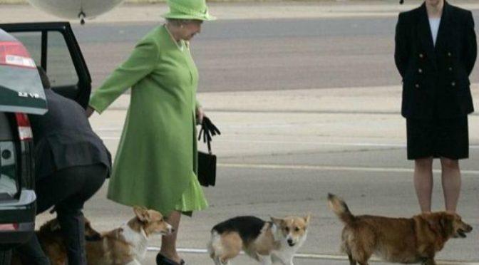 Fallece Willow, uno de los perros corgi galés de Isabel II