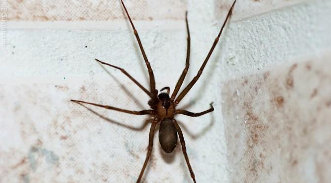 Arañas: Mitos, características y peligrosidad