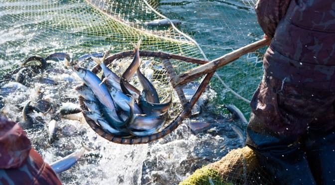 México y Estados Unidos concertan acciones de conservación de recursos pesqueros
