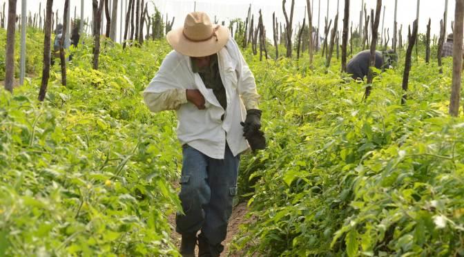Necesario esfuerzo global en favor de seguridad alimentaria
