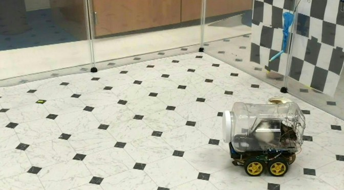 Científicos logran entrenar ratas para conducir diminutos vehículos