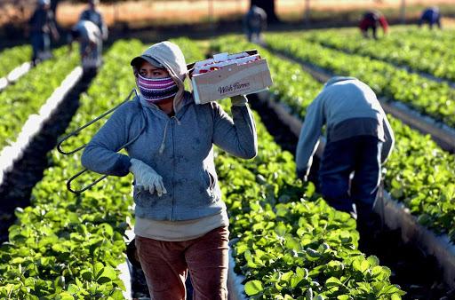 México y Canadá acuerdan reanudación de programa de trabajadores agrícolas temporales