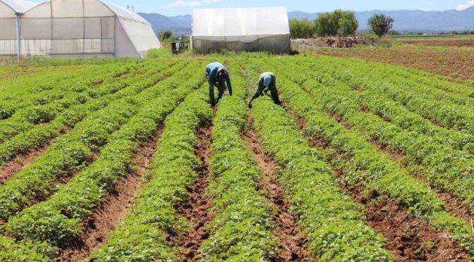 Inversores instan a Europa a priorizar el clima en la reforma agrícola