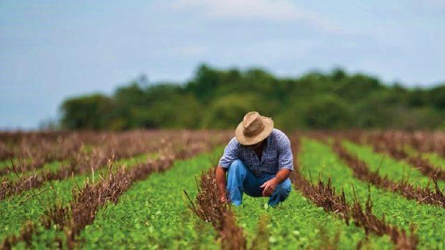 Juez estadounidense bloquea programa de alivio de deuda de 4 mdd para agricultores minoritarios