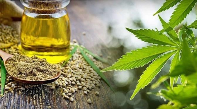 Cannabis, sus beneficios y cuál es el estatus actual de los productos en México