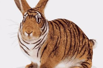 tigris-nyul