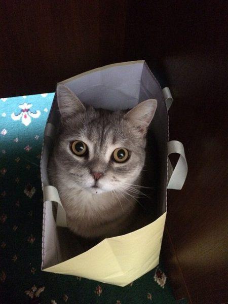 chat jeu sac