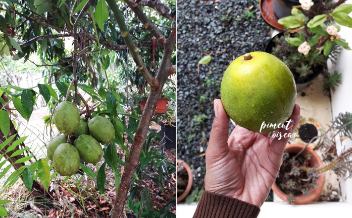 pomme cythère