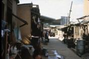 Tondo 1981