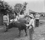 Sul carabaw o buffalo