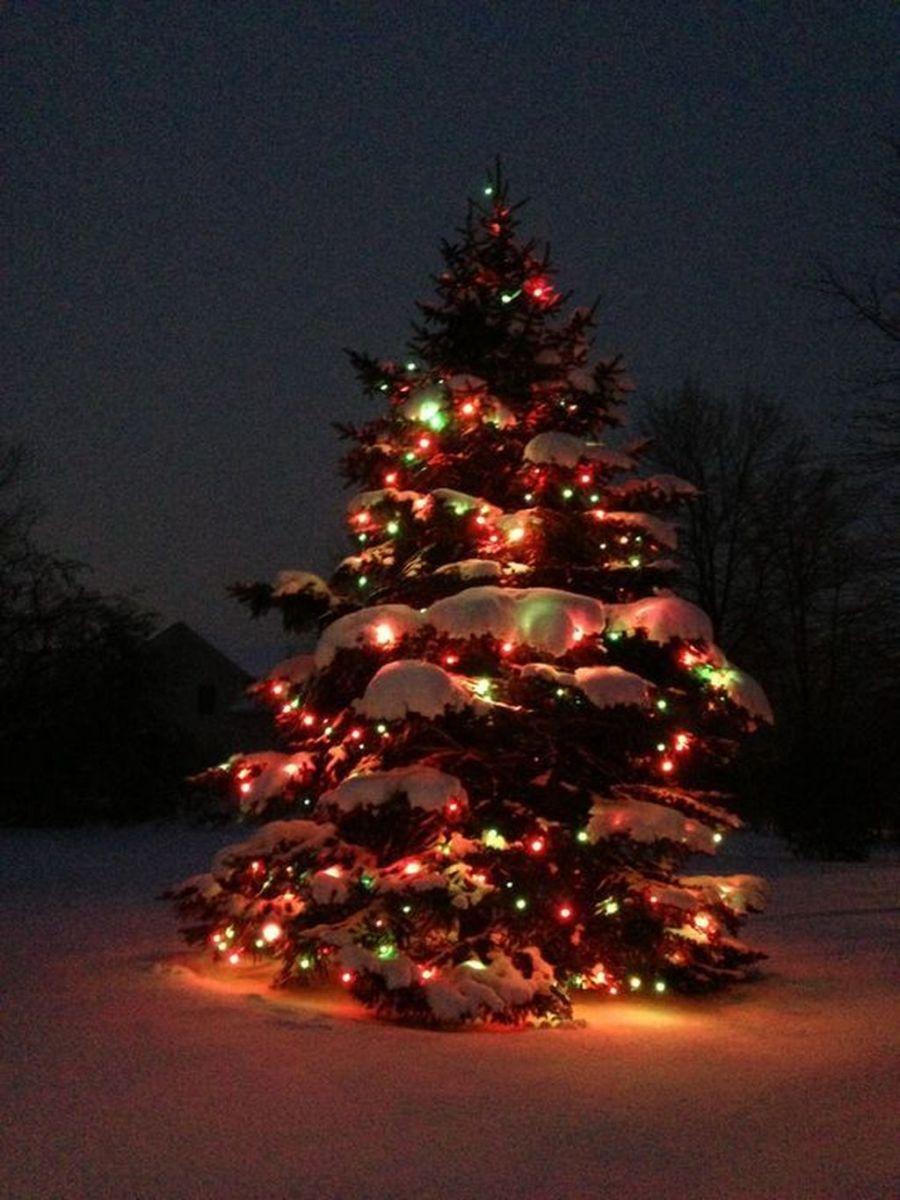 Amazing Christmas Lights Tree Decoration Ideas 22