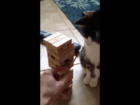 Jenga Cat – lolcat YouTube