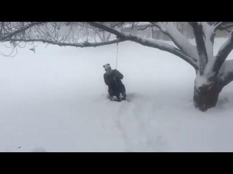 Panda fait de la balançoire dans la neige – Snowzilla 2016 – YouTube