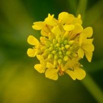 Memoria Narrante, il fiore dell'amore, foto web
