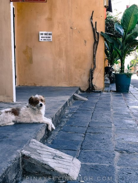 a dog at the storefront in hoi an