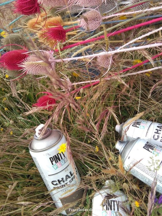 Cardos y Chakl Paint de Novasoljunio 2016 (32)