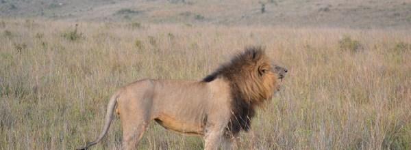Kenya – 2014, 2015: Safari Nairobi National Park