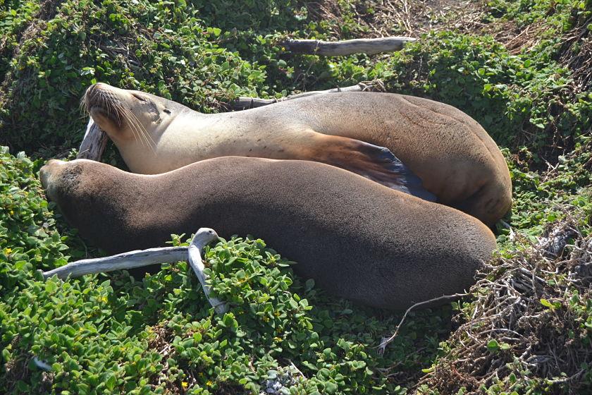 Diario Australia - Julio-Agosto 2016: Días 20,21: Kangaroo Island