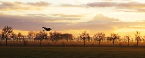 Morning Heron, Netherlands ©Siel Wellens