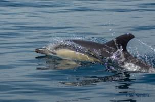 Dolphin Greetings, Algarve, Portugal