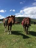 hestene-forifra